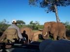 A truly African Safari.